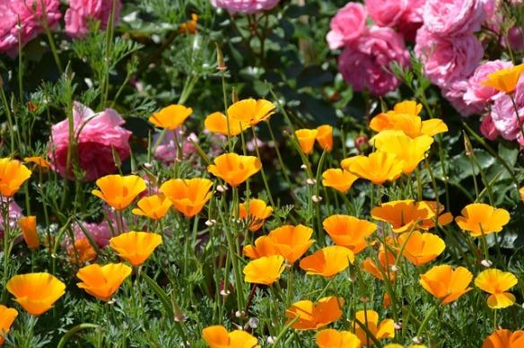 flower-garden-883506_640