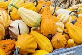 gourds-936516__180