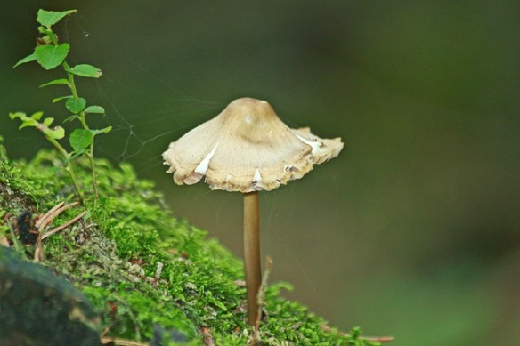 mushrooms-990968_640