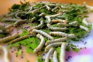 silkworm-109059_640