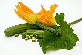 zucchini-572542__180