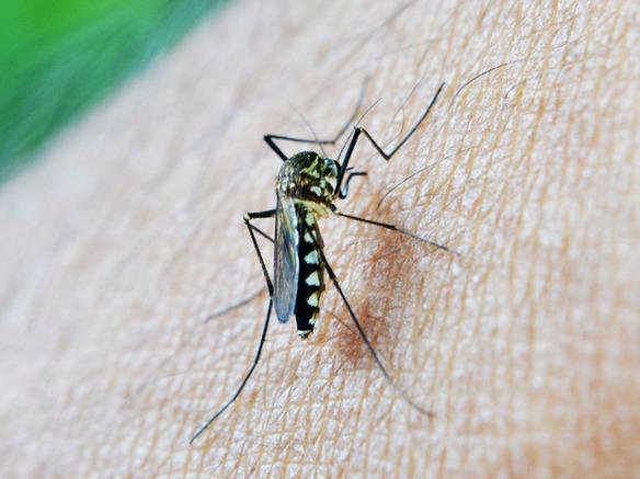 mosquito-213806_640